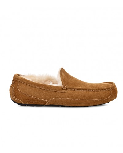Ascot in Chestnut by UGG